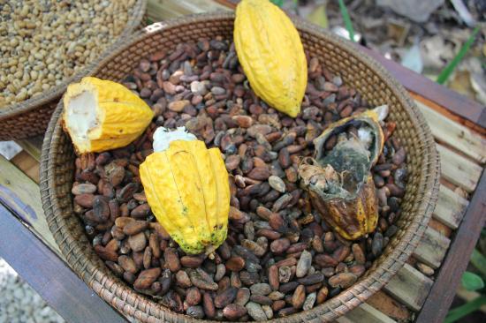 Manik Abian Bali Agriculture