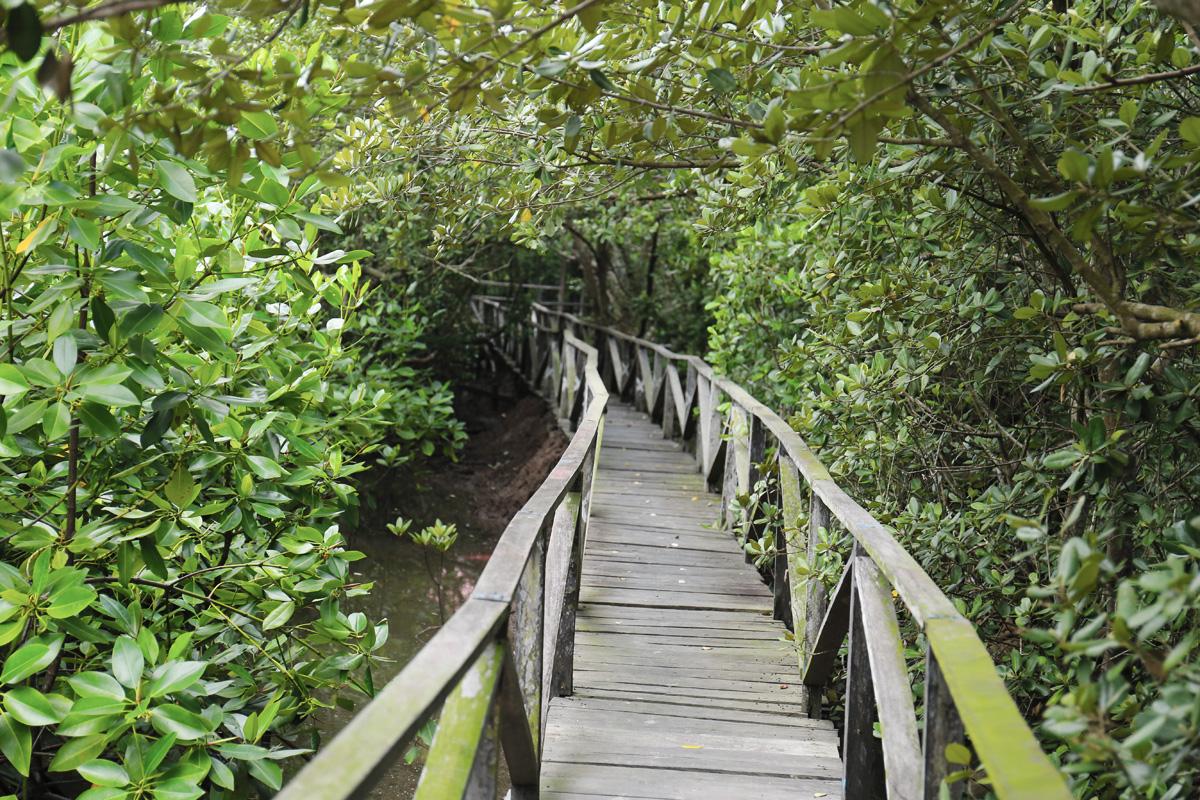 Hutan Mangrove Margomulyo