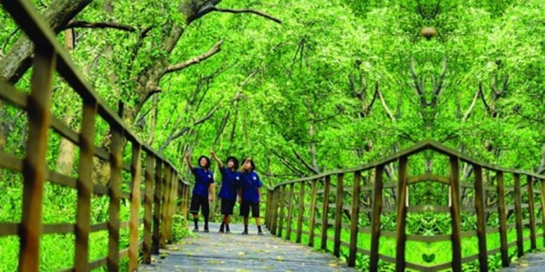 Hutan Mangrove PIK