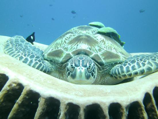 Menyelam - 3w Dive Gili Air