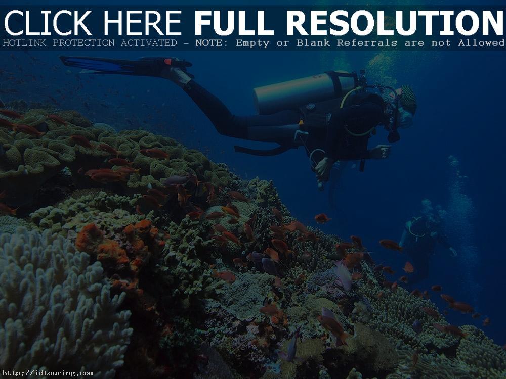 Gili Meno Divers