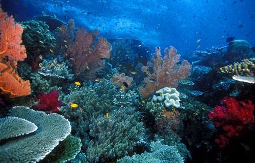 Gili Islands Divers