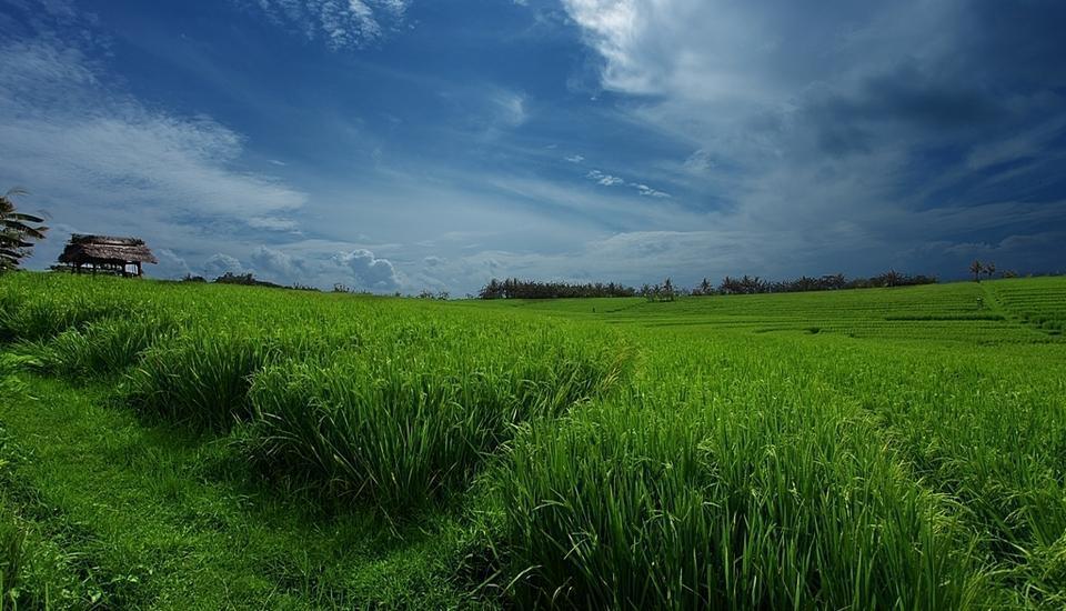 Soka Indah Bali - Ricefield