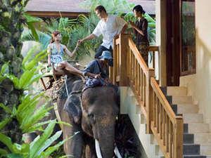 Elephant Safari Park Bali - Elephant chauffeur