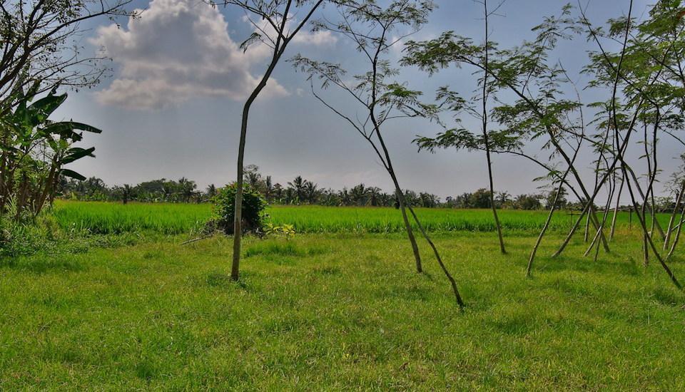 Taman Harum Cottages Bali - SURROUNDING