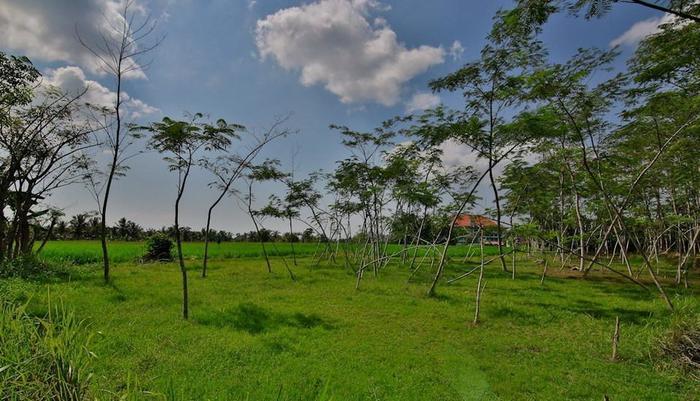 Taman Harum Cottages Bali - RICE FIELD