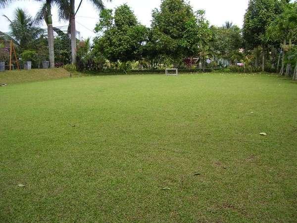 Aquarius Orange Resort Bogor - Rice Field
