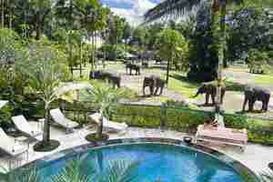 Elephant Safari Park Bali - Pool