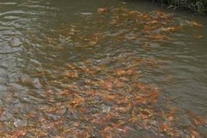 Puri Sunny Hotel Bali - Puri Sunny Fish Farms