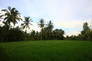 Guest House Kudos Bali - Garden