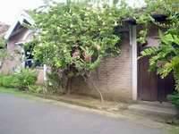 Joglo Putu Inten Jepara Villa Begonia Termasuk Sarapan