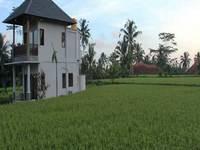 Villa Kemuning Ubud Bali Sekitarnya