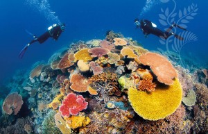 3.great barrier reef