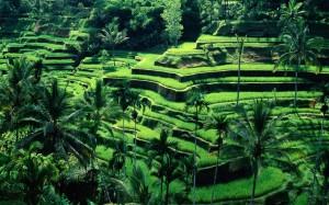 Bali-Landscape-1024x640
