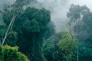 Foto 1 Hutan Pedalaman Kalimantan 1