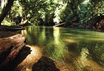 Foto 3 Hutan Pedalaman Kalimantan 1
