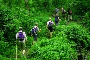 Foto 4 Hutan Pedalaman Kalimantan 1