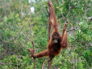 Foto 5 Hutan Pedalaman Kalimantan 1