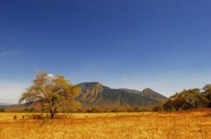 Foto 1 Taman Nasional Baluran & Gunung Ijen