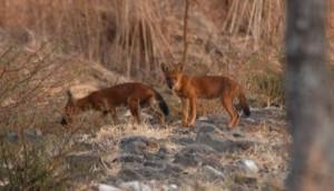 Foto 2 Taman Nasional Baluran & Gunung Ijen