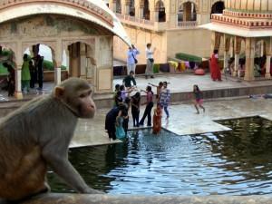 Foto 3 Tempat Wisata Jaipur, India