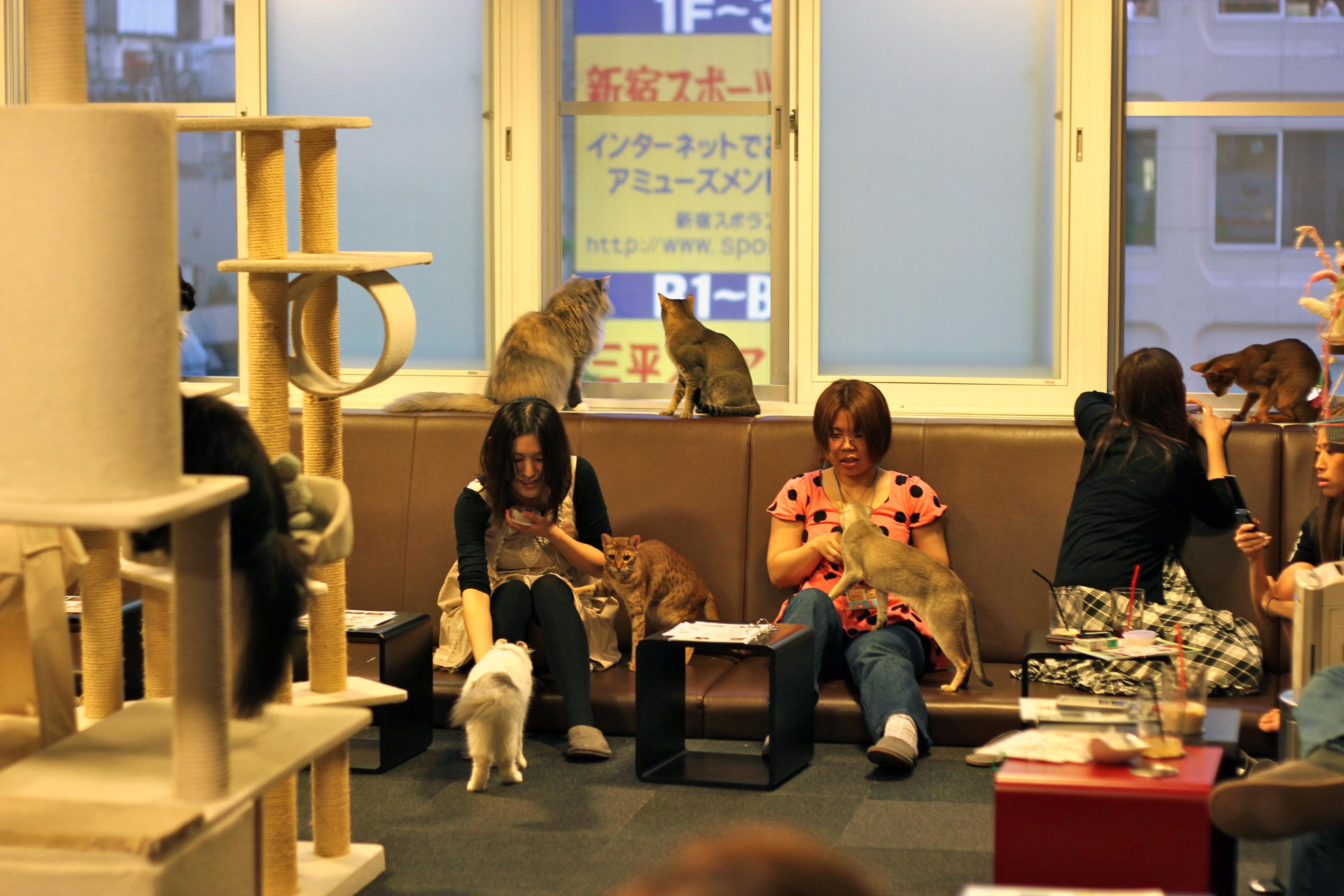 Uniknya Tren Kafe Kucing Di Negeri Sakura