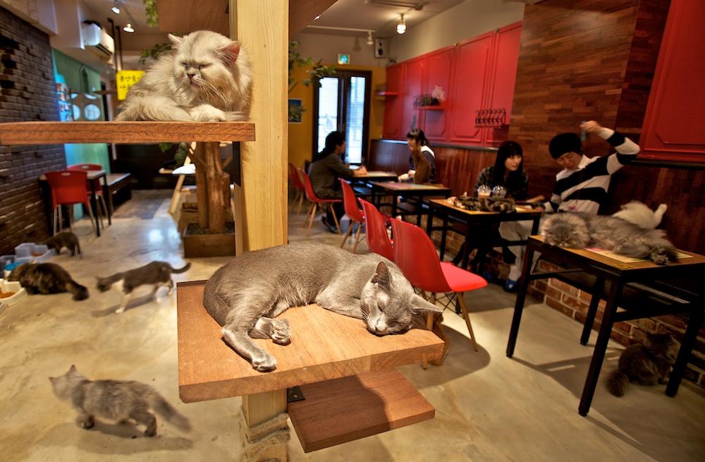 Foto 2 Kafe Kucing di Jepang