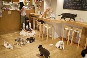Foto 3 Kafe Kucing di Jepang