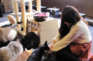 Foto 4 Kafe Kucing di Jepang