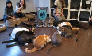 Foto 5 Kafe Kucing di Jepang