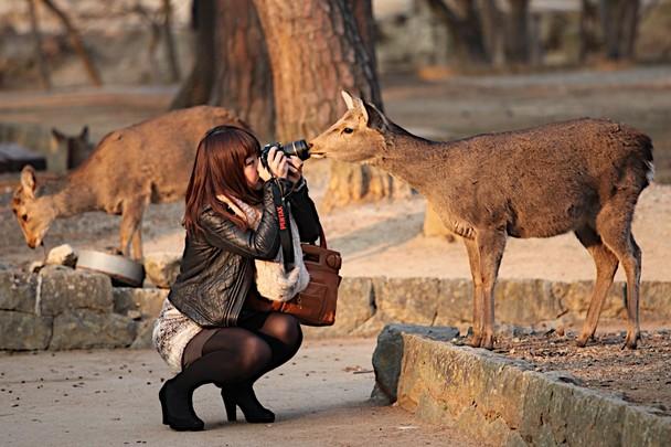 Deer Park, Jepang