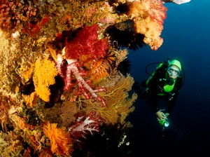 spiky soft coral and diver