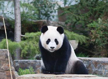 Adelaide_Zoo