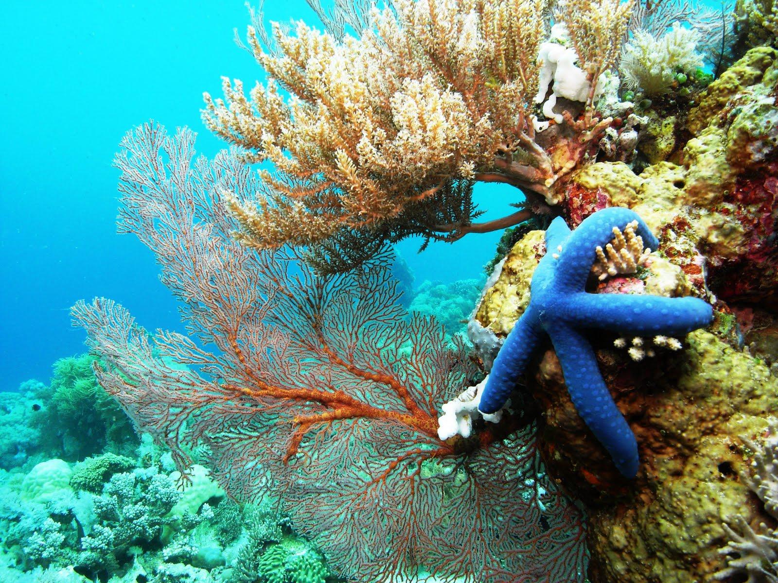 Foto 4 Snorkeling dan Diving di Pulau Selayar