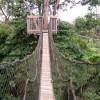 belantara-borneo.blogspot.com