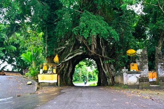 Bunut Bolong, Pohon Berlubang dengan Aura Magis di Bali