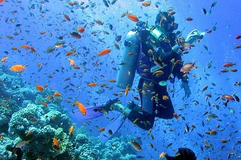 Menyelam di Bunaken