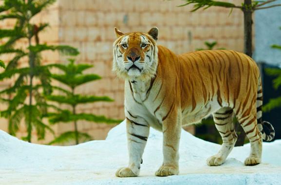 Harimau Batu Secret Zoo