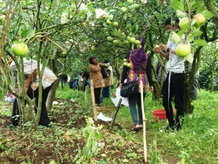 Memetik apel di Kusuma Argowisata