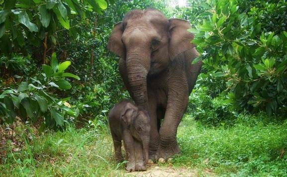 gajah di bali