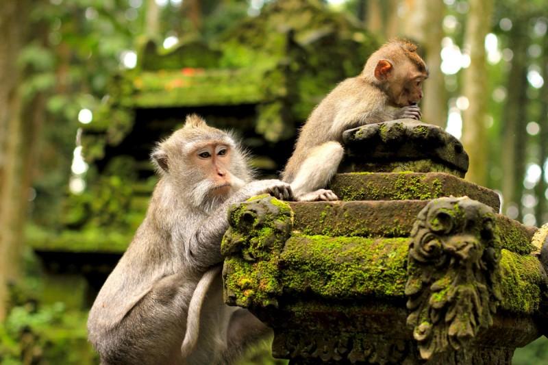 Sangeh-Monkey-Forest