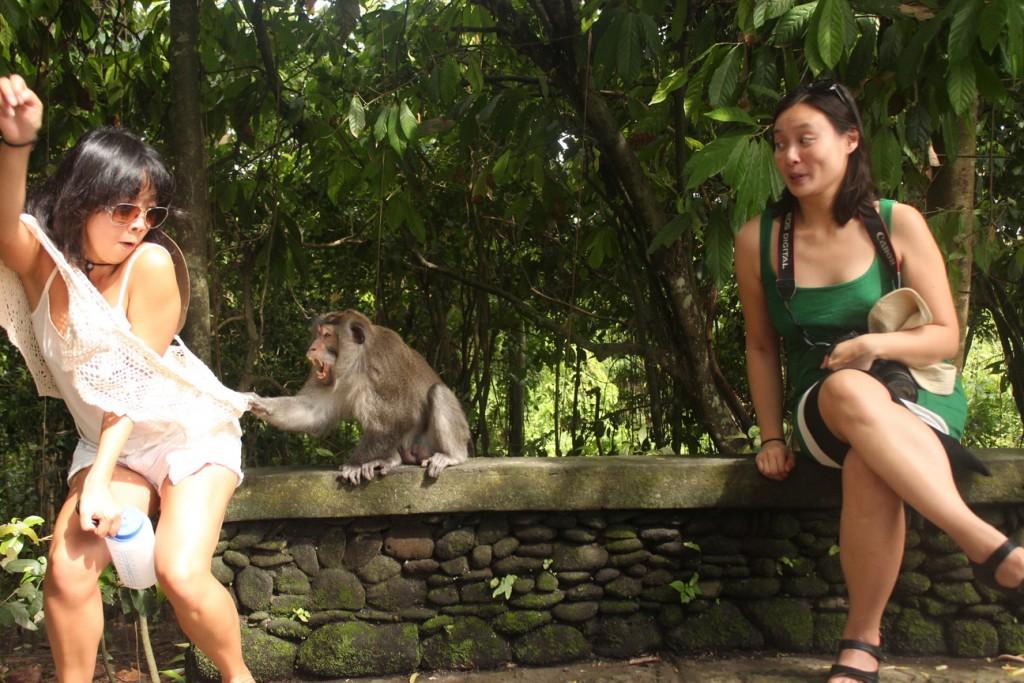 monkey-04