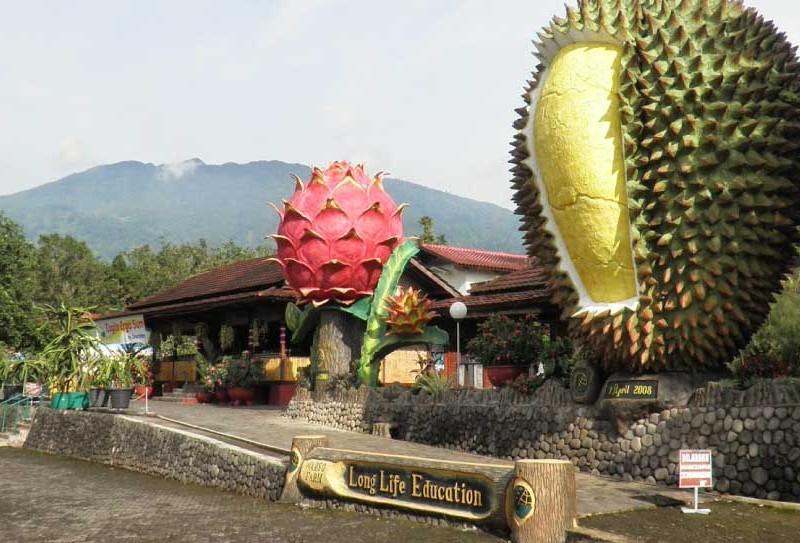 kebun_durian_warso_bogor-800x543