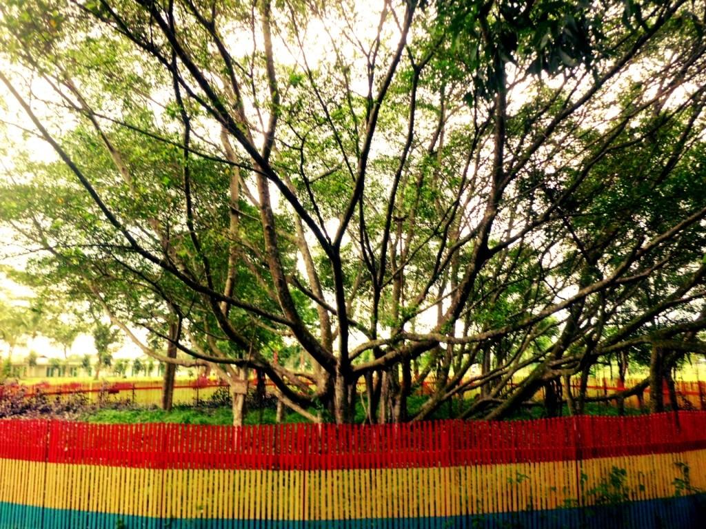 pohon cinta