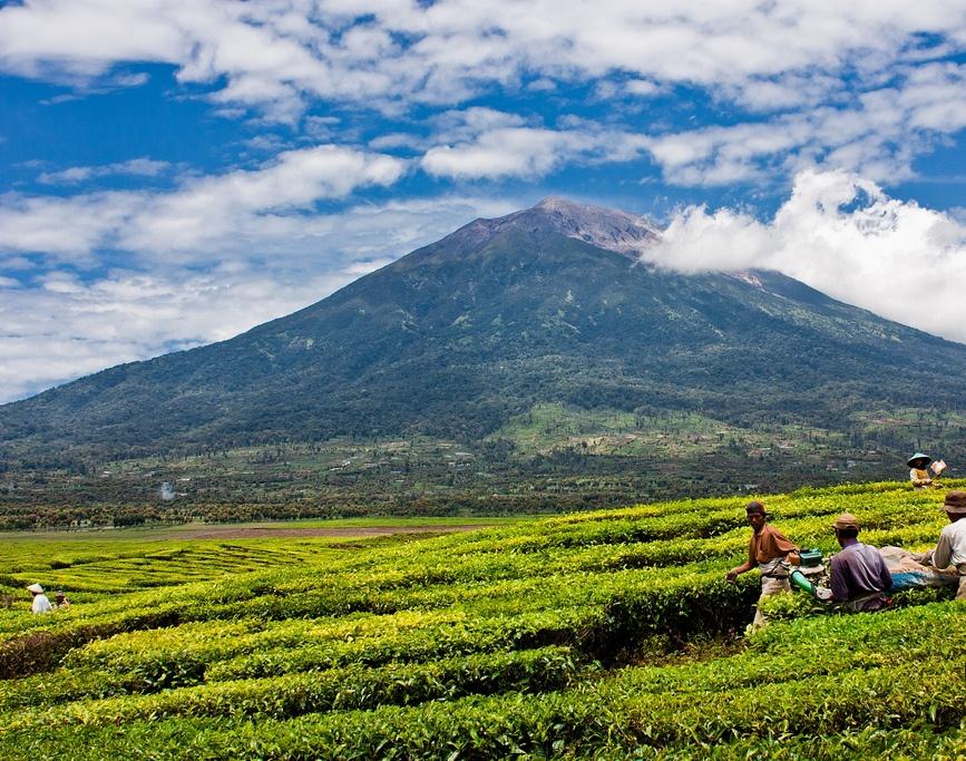 [Image: Kayu-Aro-tourismjambi.com_1.jpg]