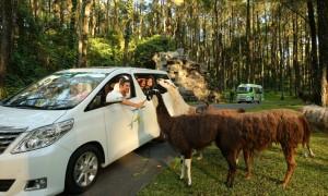 taman safari prigen8