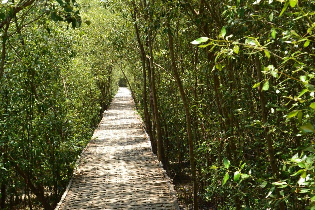 hutan mangrove wonorejo1