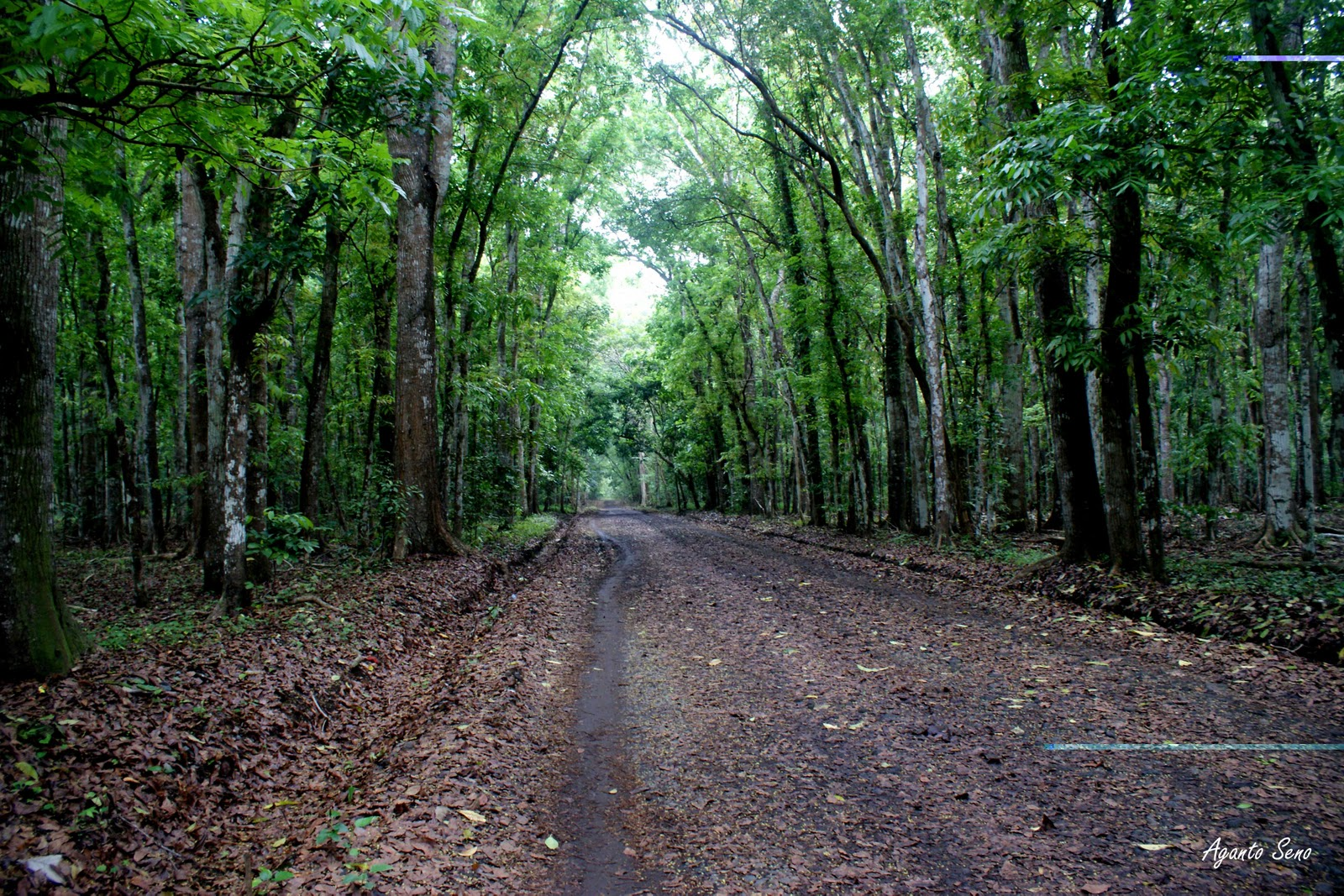 abouttourismbanyuwangi.blogspot.com