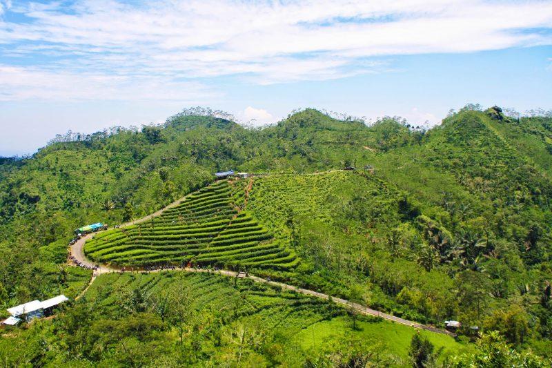 6 Kebun Teh Cantik di Pulau Jawa