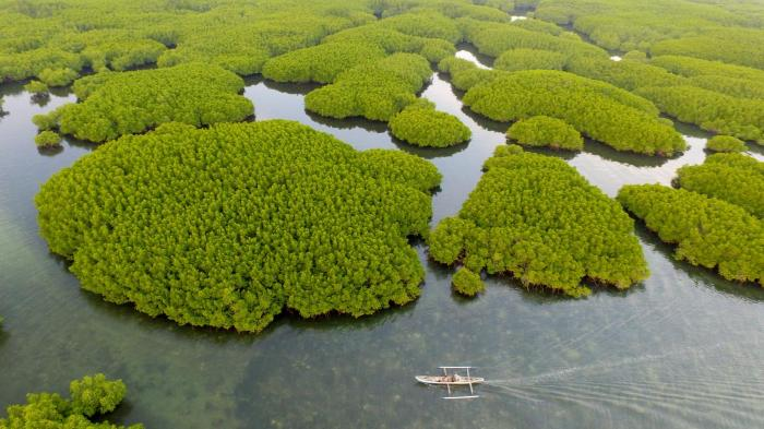hutan-mangrove-desa-bontolebang